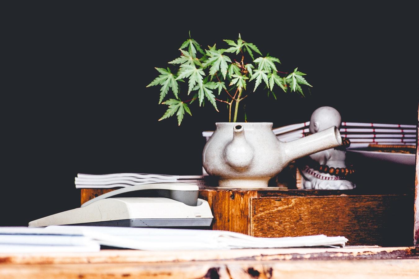 Fleur de CBD (cannabidiol) : comment les choisir et les consommer ?