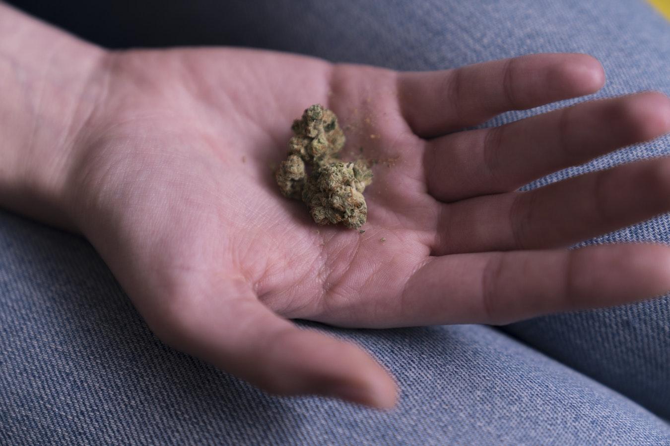 Cannabis sans THC : une tendance qui s'accélère