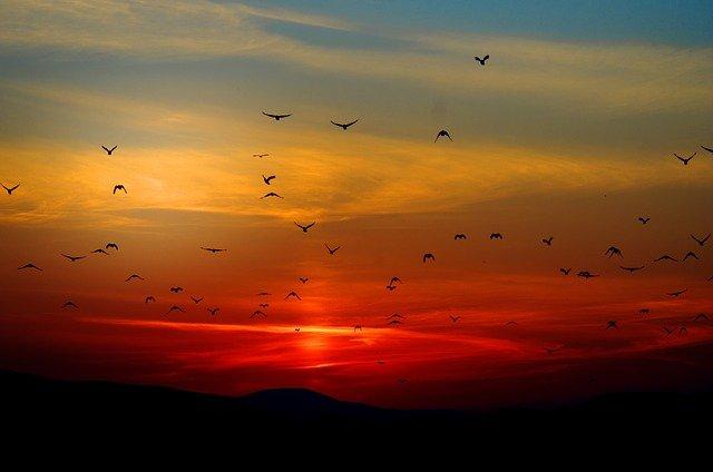 Oiseaux s'éloignant - autohypnose